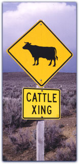 Cattlex