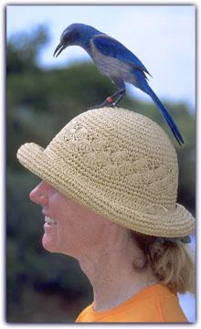 Hatbird